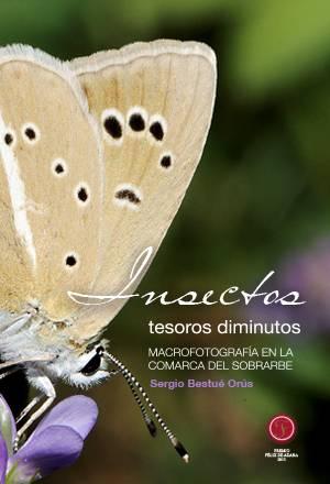 Insectos, tesoros diminutos